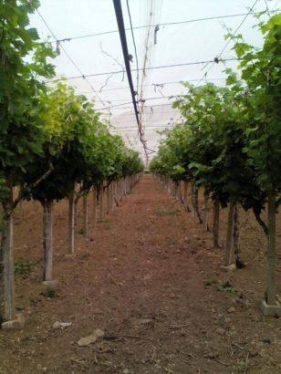 Terrain Agricole a Vendre – Jbal Rsas